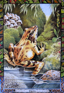 Frog card illustrated by Bill Worthington for the Druid Animal Oracle Deck