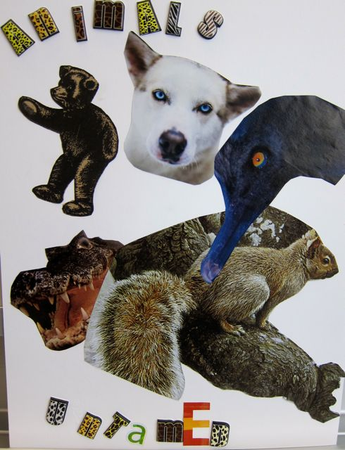 Derrick's Collage Animals Untamed