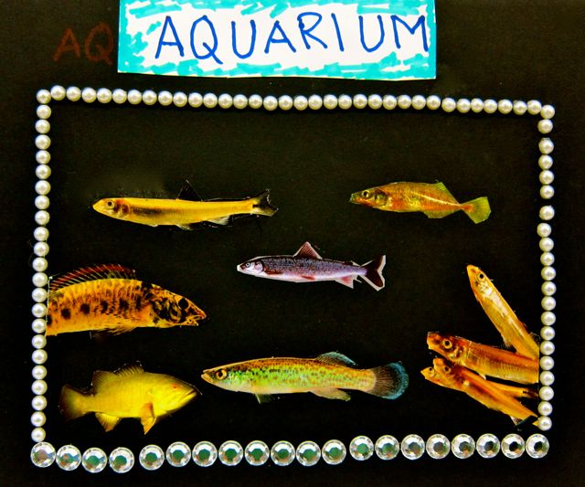 Zayeed's Aquarium