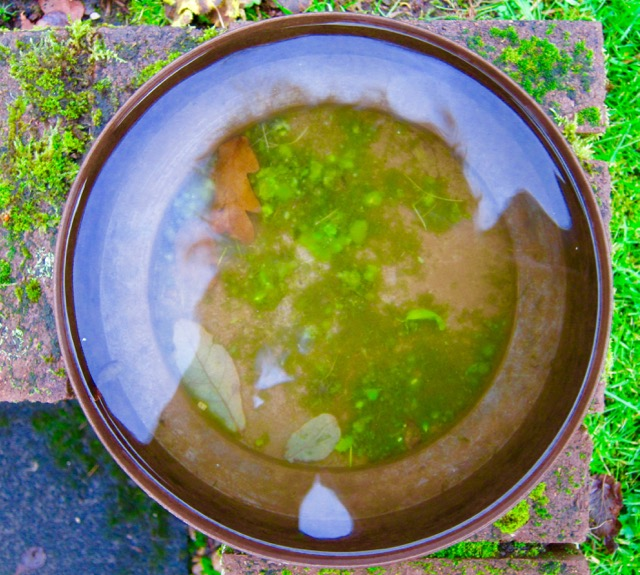 Garden Water Bowl, 2015