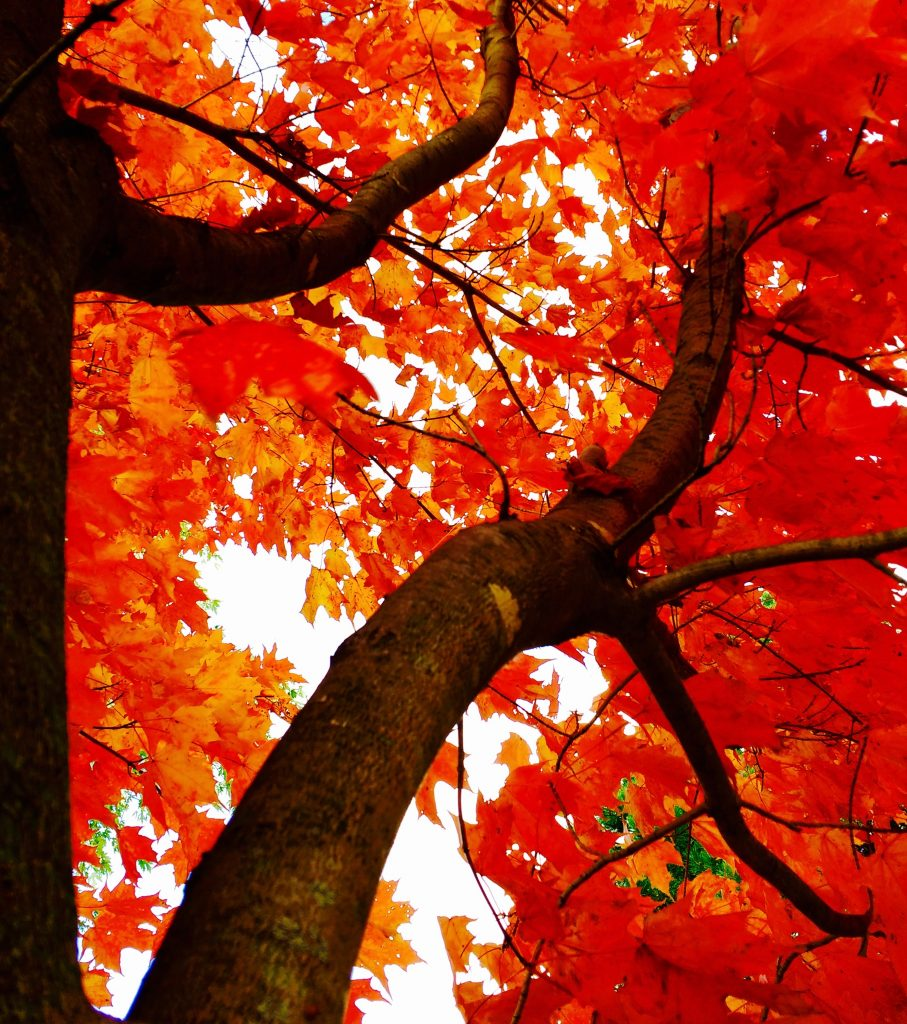 Woodbine Park, Toronto